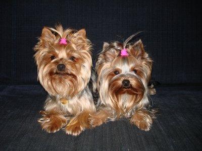 Stella a Sunny