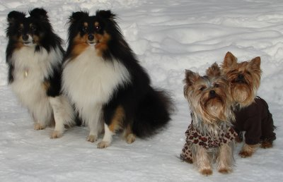 Viki, Benji, Sunny a Stella