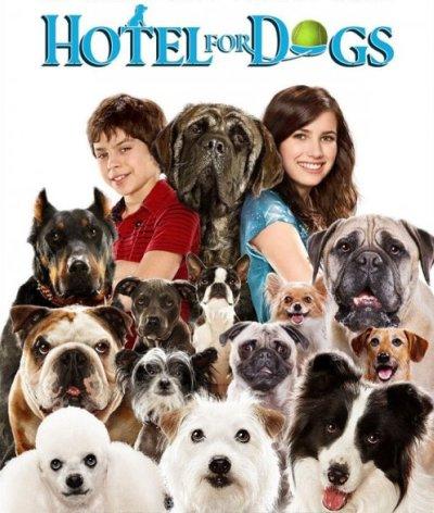 Hotel pre psov