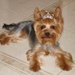 Najelegantnejší pes - 4.miesto - Stella