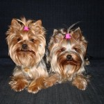 Najroztomilejší pes - 2.miesto - Stella a Sunny
