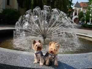 Sunny a Stella pri fontáne