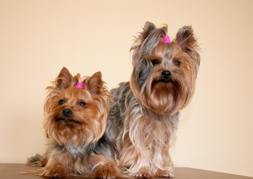 Stella a Sunny ako modelky