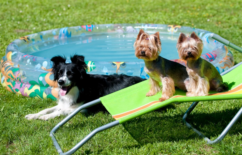 Mendy, Stella a Sunny