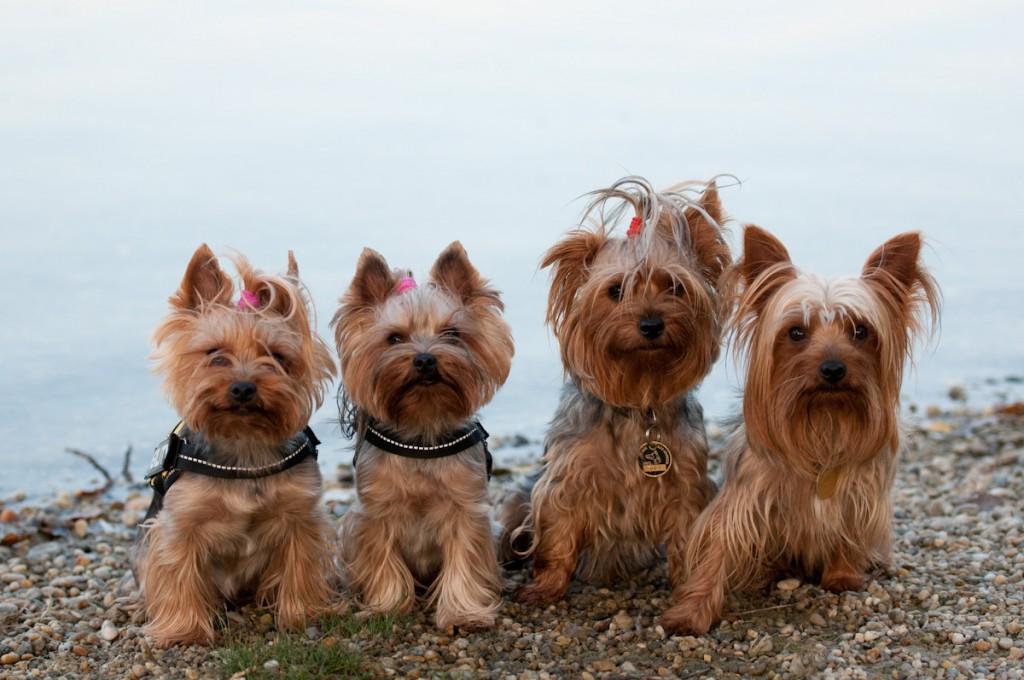 Stella, Sunny, Megy, Charlie